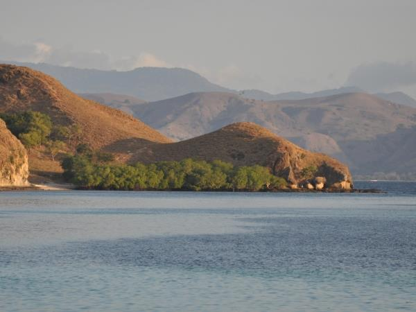 Komodo Dragons 4 day tour, Indonesia