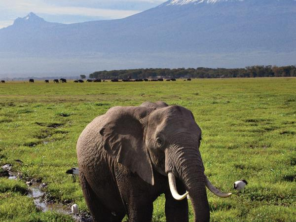 Kenya wildlife and safari vacation