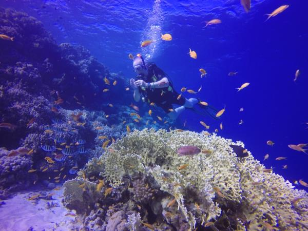 Red Sea diving vacations