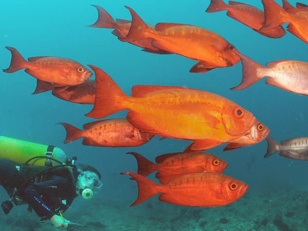 Mozambique scuba diving vacation