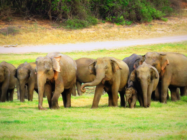 Sri Lanka wildlife vacation, tailor made