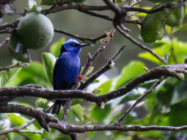 Costa Rica wildlife & beaches holiday