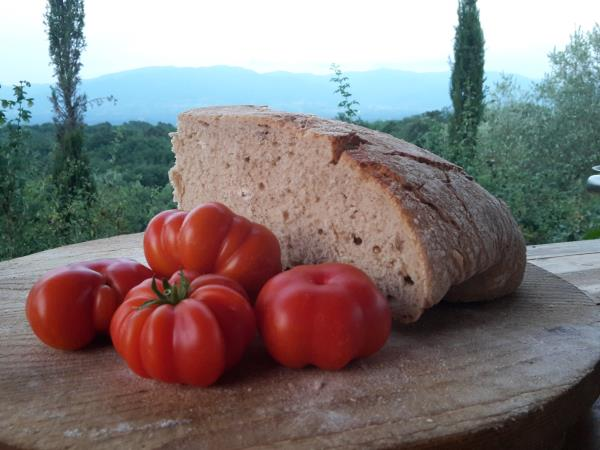 Tuscany holiday, cooking, walking, truffle-hunting tour