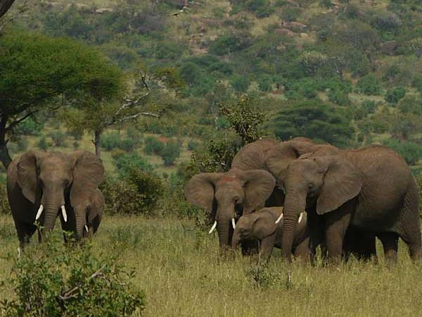 Tanzania safaris, wildlife of the Maasai