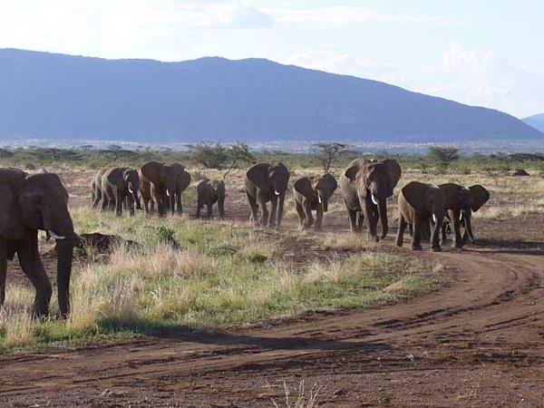 Kenya vacations, safari and beach vacation