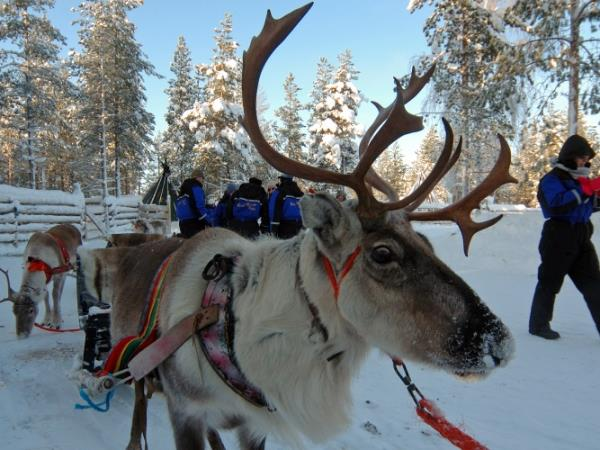 Finnish Lapland activity vacation with log cabin