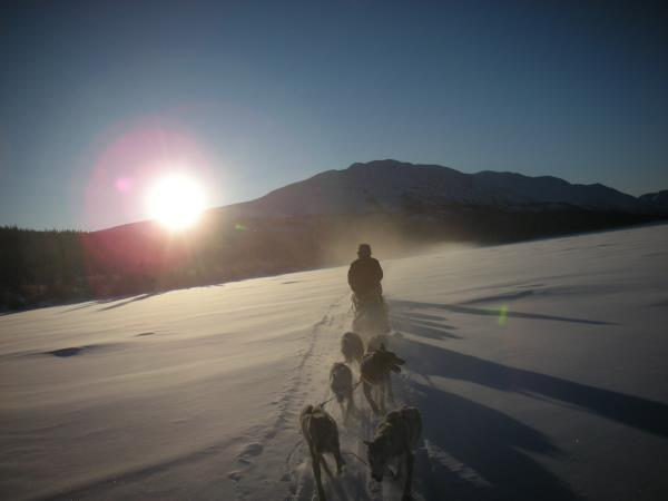 Yukon dog sledding vacation, Canada