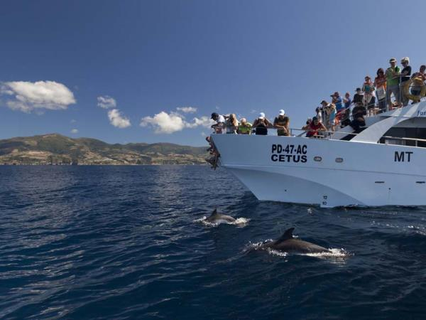 Azores family adventure vacation, whales and dolphins