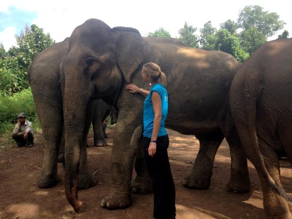 Elephant conservation volunteering in Laos