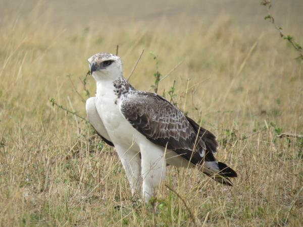 Culture and birding vacation in Uganda