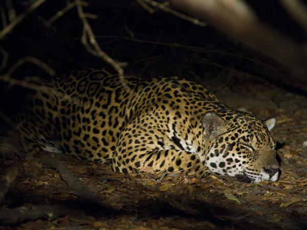 Brazil wildlife vacation, Jaguars and Amazon