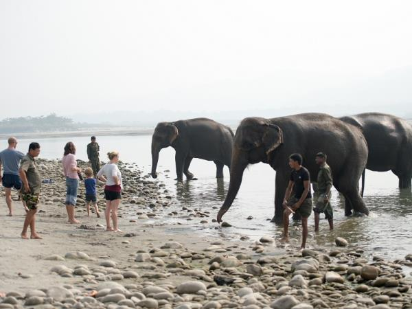 Elephant vacation in Nepal