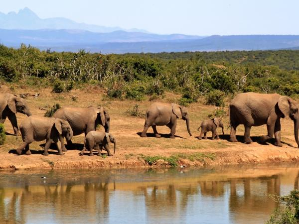 South Africa family adventure vacation, tailor made
