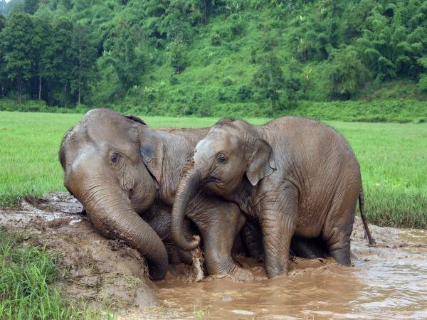 Thailand family tour, elephants and Islands