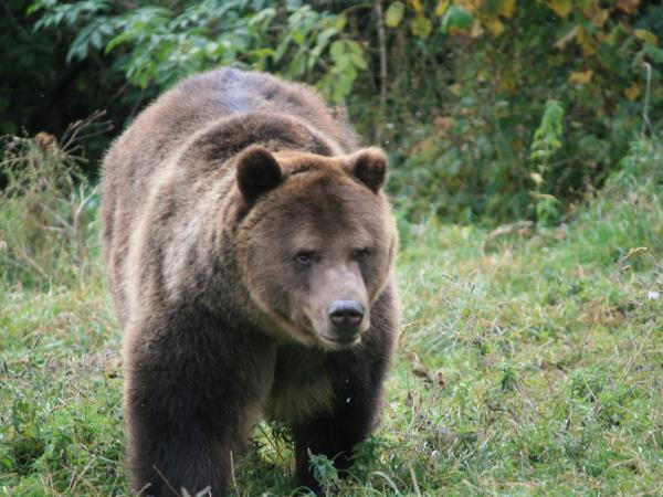 Romania wildlife vacation, bear tracking and birdwatching