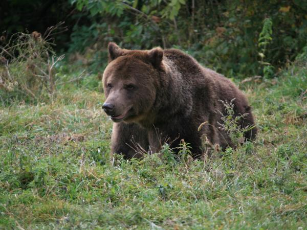 Romania bird watching and bear tracking vacation
