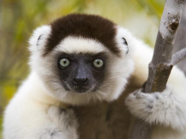 Madagascar wildlife and beaches vacation