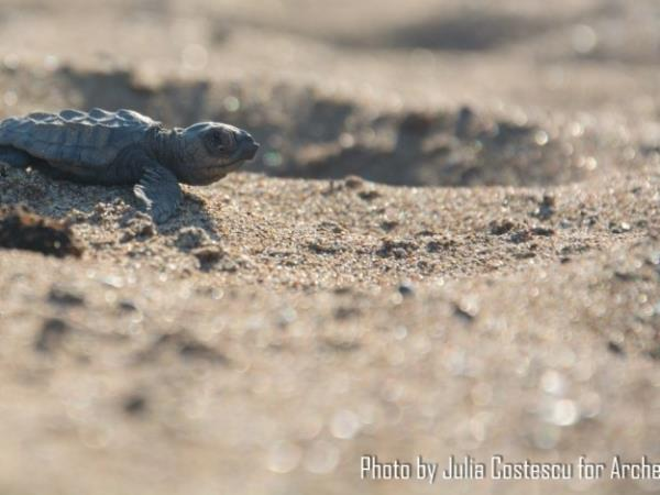 Peloponnese turtle conservation holiday, Greece