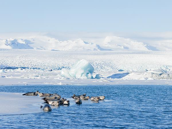 Arctic cruise from Spitsbergen to Greenland