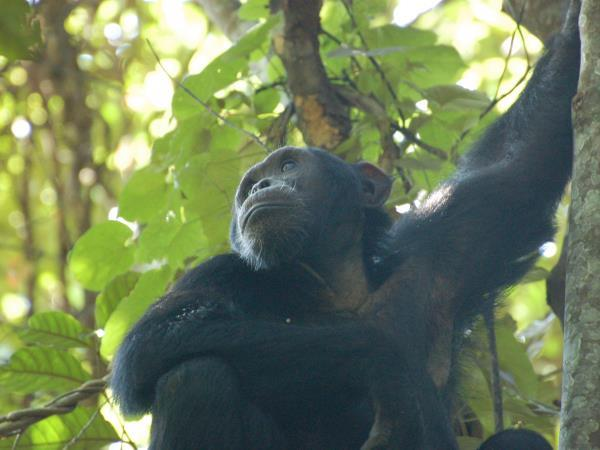 Uganda wildlife and activity vacation