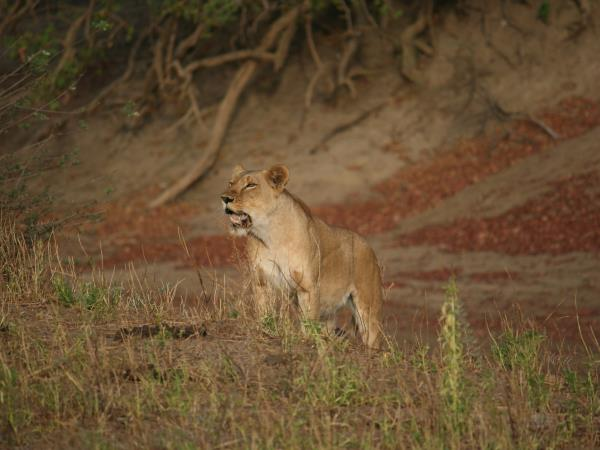 Chad wildlife safari, Zakouma national park