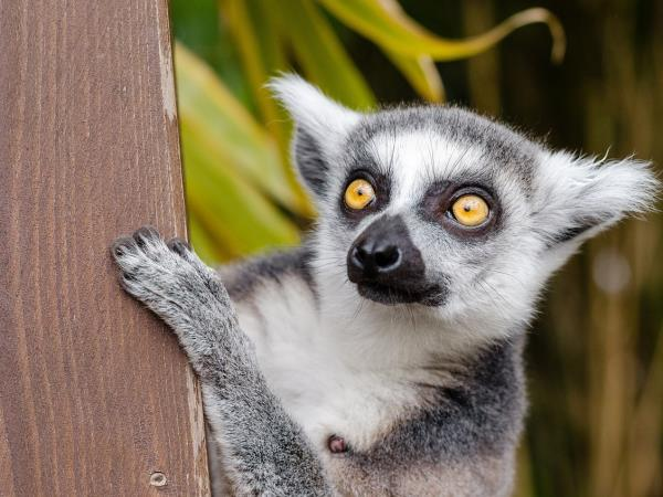 Madagascar 6 day tour