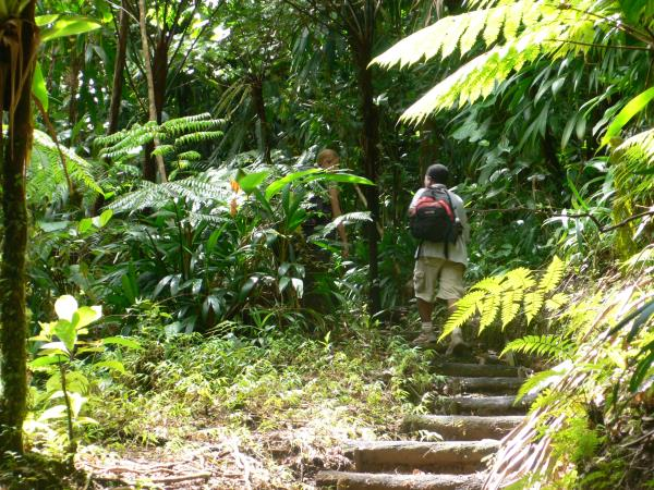Hiking vacations in Dominica, 11 days
