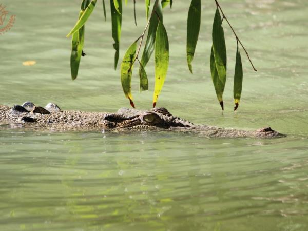 Northern Territory wildlife tour, Australia
