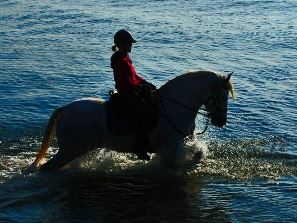 Catalonia horse riding, Pyrenees to the Mediterranean