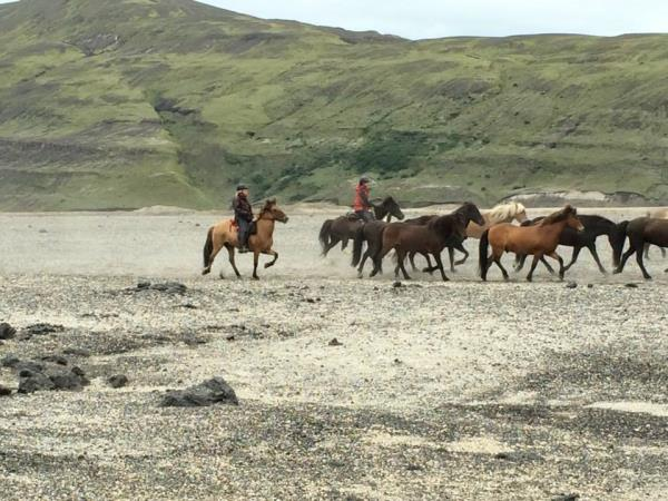 Horse riding vacation in Iceland