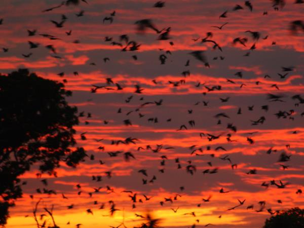 Bird and bat safari in Zambia
