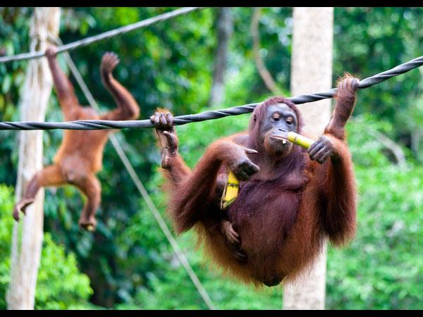 Borneo wildlife safari