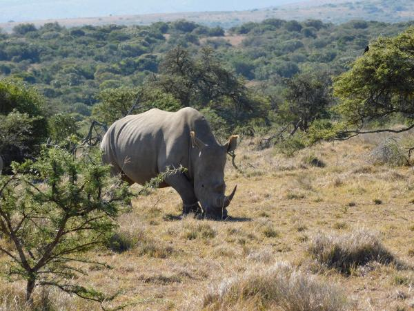 Big five conservation in South Africa