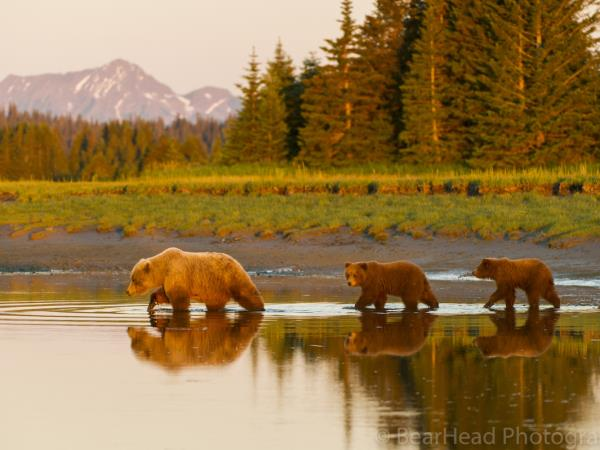 Brown bear photography workshop, Alaska
