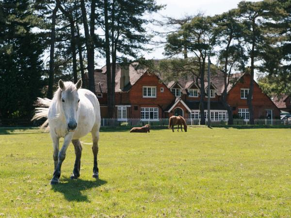 Country hotel nr Beaulieu, New Forest, England
