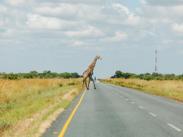 Southern Africa budget vacation
