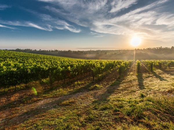 Bordeaux wine tour and Bay of Arcachon vacation