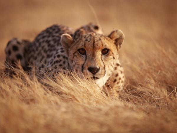 East Africa Safari holiday, tailor made