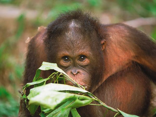 Borneo wilderness adventure vacation