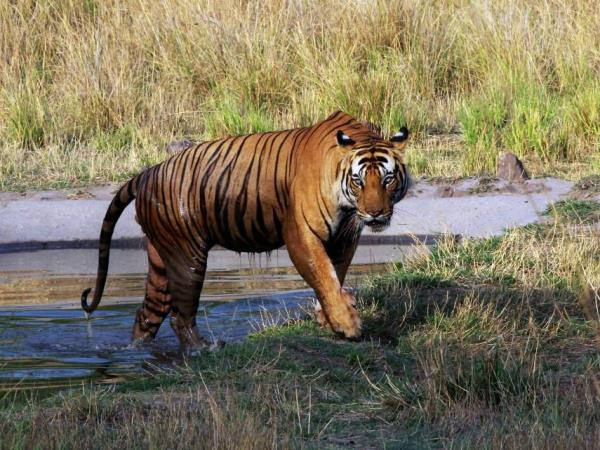 Tigers and rhinos tours in India