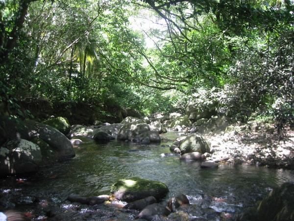 Dominica nature holiday