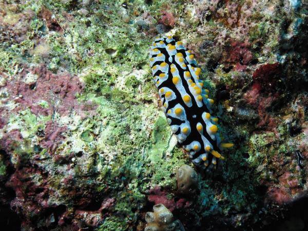 Marine conservation expedition in East Timor