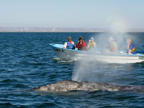 Mexico wildlife and sea kayaking expedition