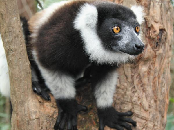 Madagascar hike & bike vacation