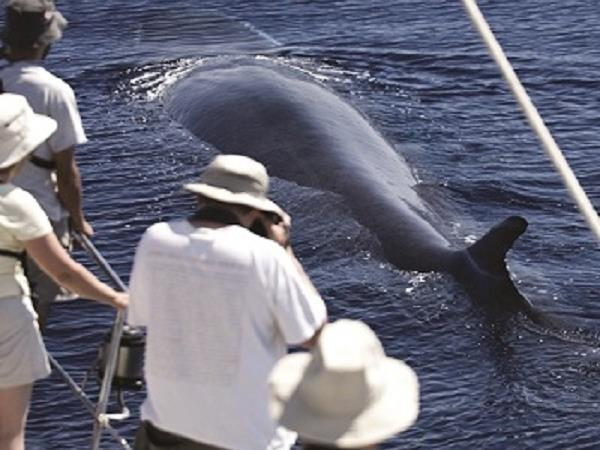Blue whale Azores family vacation