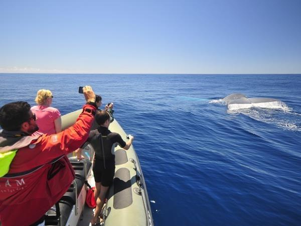 Azores whale vacation, Blue Whale bonanza