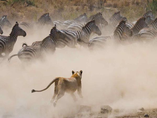 Complete Kenya Safari Helping Dreamers Do
