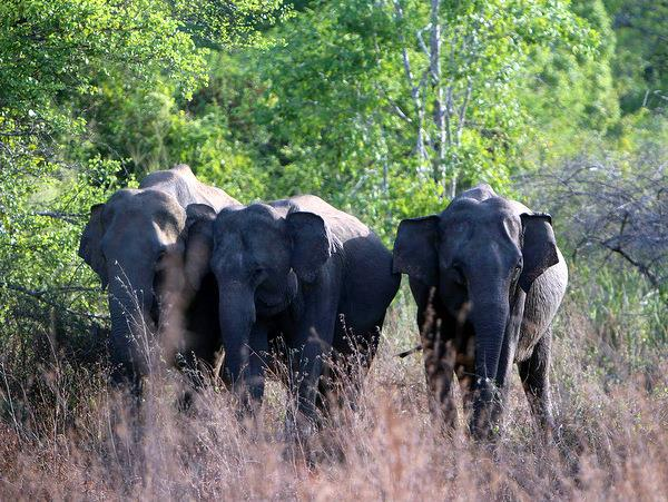 Elephant conservation project in Sri Lanka
