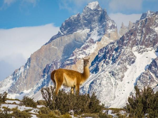 Patagonia Puma Tracking Vacation Helping Dreamers Do