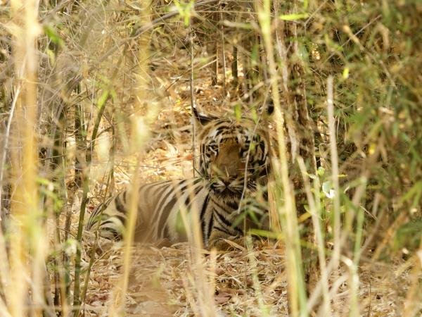 West-central India wildlife vacation